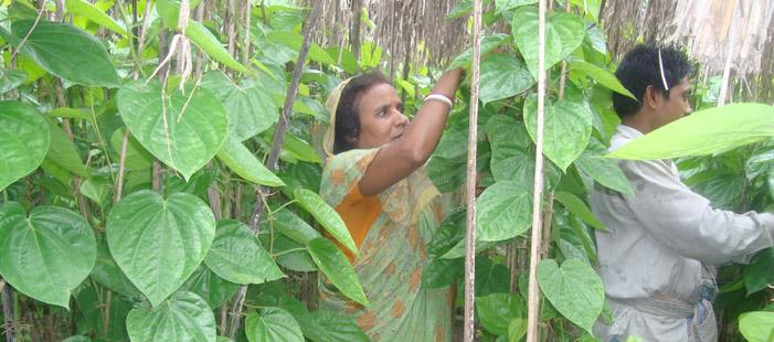 Micro-finance Beneficiaries